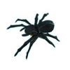 クモとクモの糸